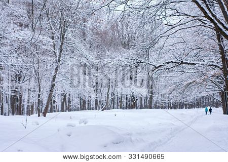 Footpath In Deciduous Winter Wood. Forest Snow