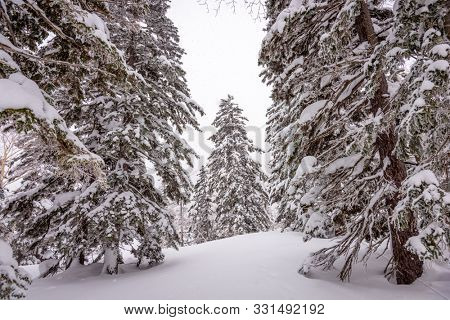 Mt. Kurodake  Hokkaido, Japan wintery hiking trail.