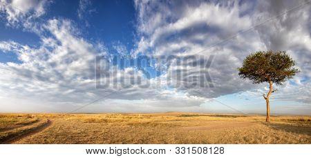 Panorama of the grasslands of the Masai Mara, Kenya, with a lone acacia tree and track.