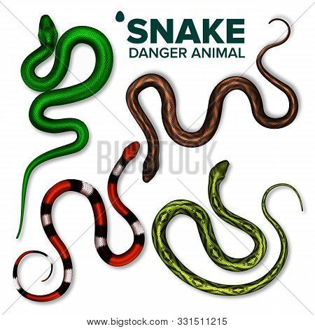 Snake Collection Of Wild Danger Animal Set Vector Top View. Brightly Multicolored Skin Snake. Crawli