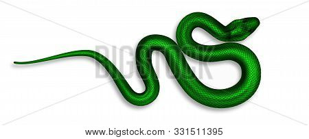 Exotic Snake With Danger Poison Top View Vector. Wild Tropical Green Palm-pitviper Snake. Crawling D