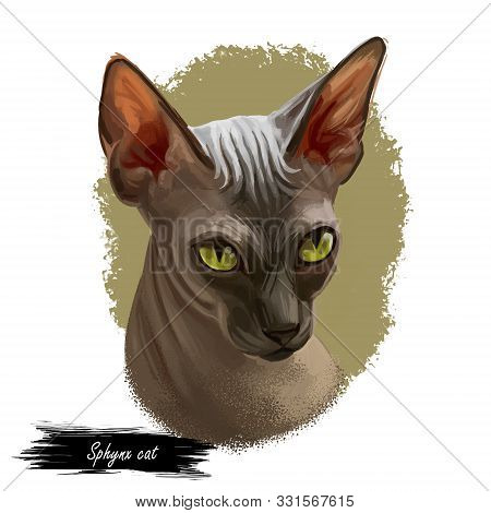 Sphynx cat breed known for lack of coat fur isolated. Digital art illustration of pussy kitten portrait, feline food cover design, veterinary vet clinic label. Fluffy domestic pet, t-shirt print. poster