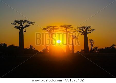 Baobab Alley Against The Background Of Sunset, Madagascar