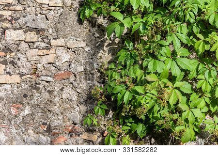 Abstract Background Wiht Stone Wall And Grape Twigs.