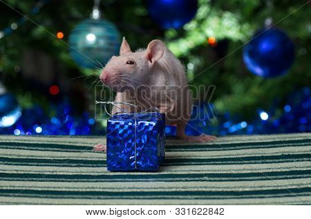 Decorative Rat With Toys And Gifts At The Christmas Tree.