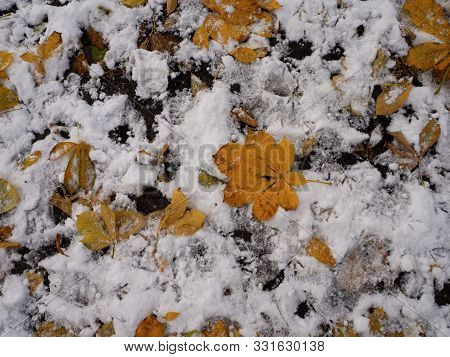 Yellow Autumn Leaves Lie On The Ground Covered With First Snow In November, Bird Footprints On The G