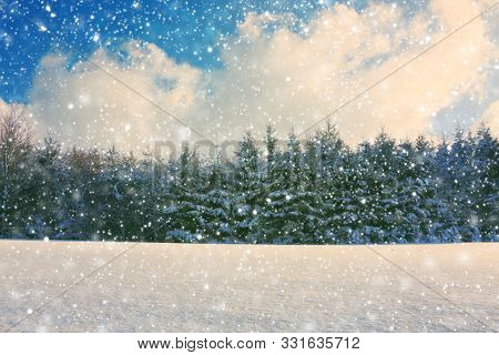 Winter Landscape With Fir Trees And Snowfall. Winter Background.