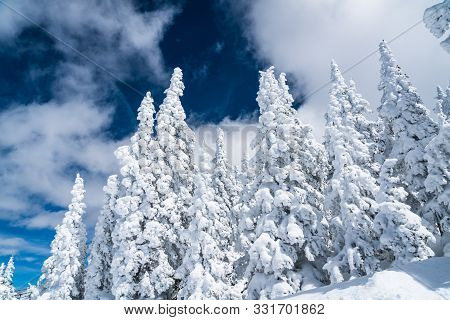 Perfect Lighting In Winter. Thick Powder Snow Close Up On Trees Covered In Winter Snow. On Top Of Th