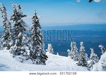 On Top Of The Mountain. Santa Fe Mountain Winter Landscape. Snow Covered Winter Wonderland , Tall Tr