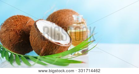 Coconut palm oil in a bottle with coconuts and green palm tree leaf on a blue and  white background. Beauty treatments. Coco nut closeup. Healthy Food, skin care concept. Vegan food, cosmetics