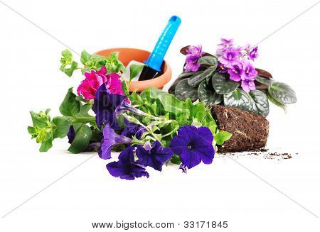 Petunias And Violets Flowers