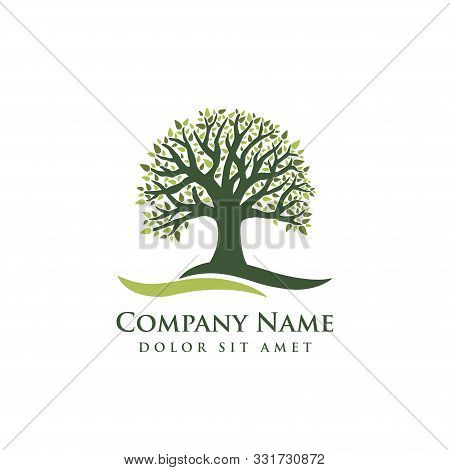 Oak Tree Vector Illustration Logo Design Template. Abstract Vibrant Tree Logo Design