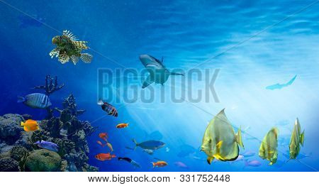 Underwater sea world. Life in the coral reef. Colorful tropical fish. Ecosystem.