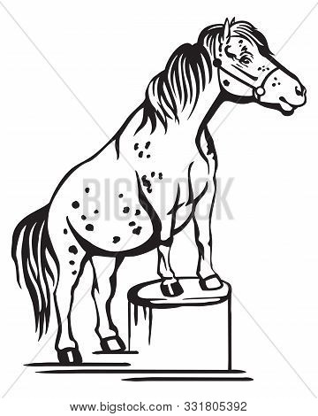 Monochrome Decorative Portrait Of Pony Standing In Profile On A Stump, Training Pony. Vector Isolate