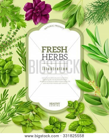 Spices Herbs Frame Illustration. Realistic Fresh Herbs Frame Illustration, Isolated Objects, Popular