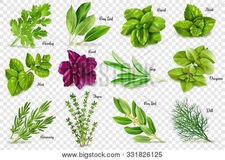 Spices Herbs Transparent Background. A Large Set Of Herbs On A Transparent Background, Isolated Obje