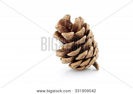 Image Of Pinecone Isolated On White Background, Closeup Pine Cone Tree Is Symbol Decoration Christma