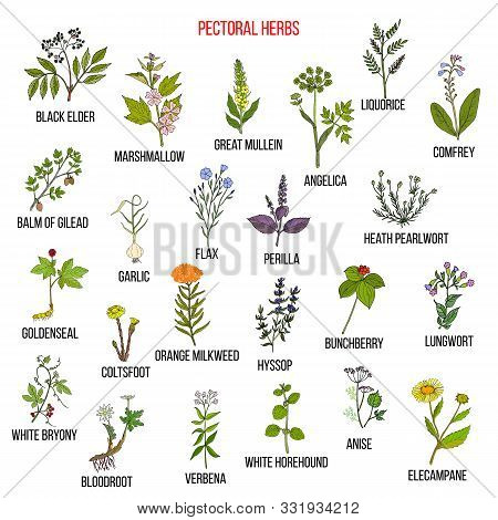 Set Of Pectoral Herbs. Hand Drawn Vector Collection Of Medicinal Plants