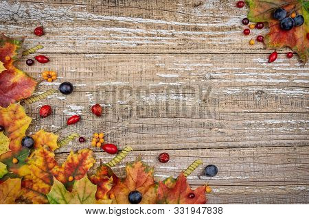 Autumn Leaves And Fruits On A Wooden Background. Background Mode. Still Life With Colorful Foliage A