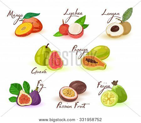 Exotic Fruits Assortment With Lettering For Menu, Recipe, Cookbook, Market Label, Packing. Natural H