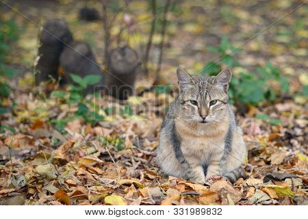 Beautiful Stray Cat Sits Among Dry Yellow Fallen Autumn Leaves
