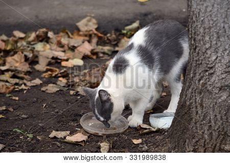 Stray Black And White Cat Eats From A Bowl Under A Tree