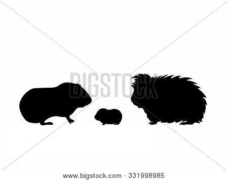 Guinea Pig Family. Silhouettes Of Pet Animals. Vector Illustrator