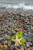 A yellow starfish on a pebble beach poster