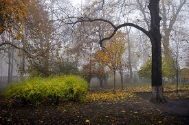 Autumn Landscape- Foggy Autumn Park Alley With Bare Trees And Dry Fallen Colorful Leaves. Picturesqu