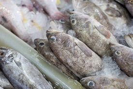 Giant Black Spot Grouper Fish Sell In Seafood Market