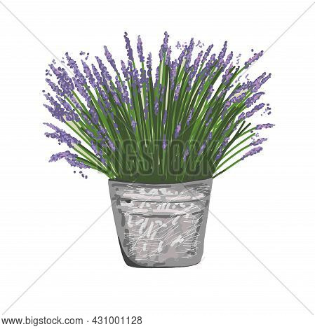 Lavender In A Bucket. Style Provence. Vector Illustration In Provence Style
