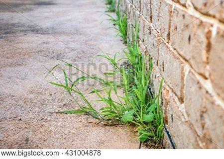Unwanted Grass On A House Backyard Waiting For Weed Killer Herbicide To Control