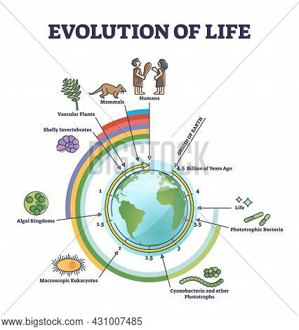 Evolution Of Life With Round Timeline For Living Creatures Development Outline Diagram. Origin Of Ea