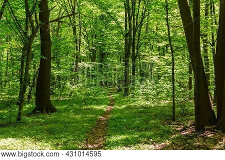 Section Of The Spring Deciduous Forest With Footpath In Center In Sunny Weather