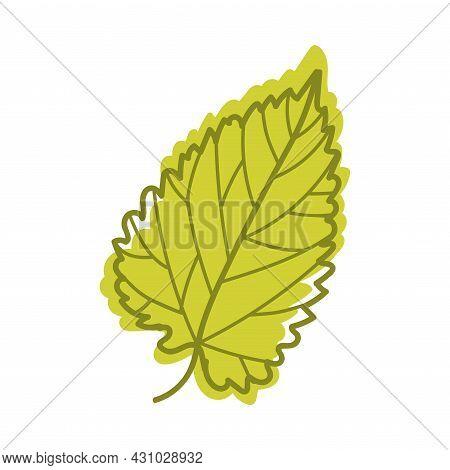 Green Autumn Leaf With Veins As Seasonal Foliage On Stem Vector Illustration