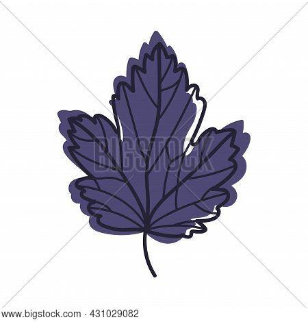 Purple Autumn Leaf With Veins As Seasonal Foliage On Stem Vector Illustration