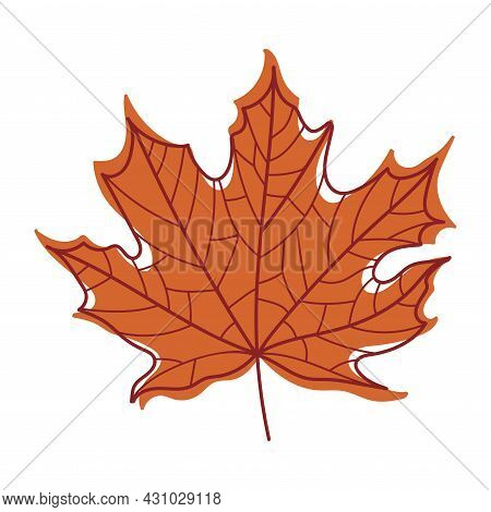Red Autumn Maple Leaf With Veins As Seasonal Foliage On Stem Vector Illustration
