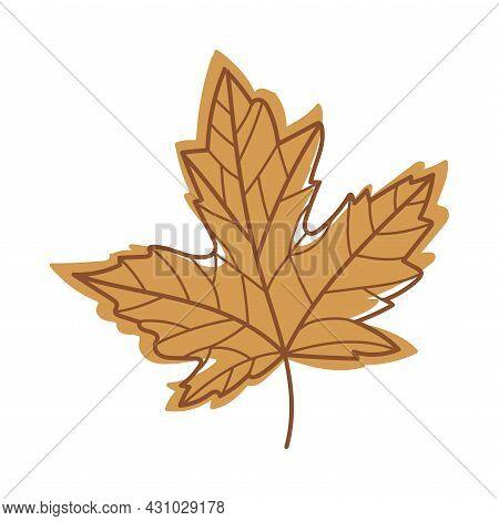 Brown Autumn Maple Leaf With Veins As Seasonal Foliage On Stem Vector Illustration