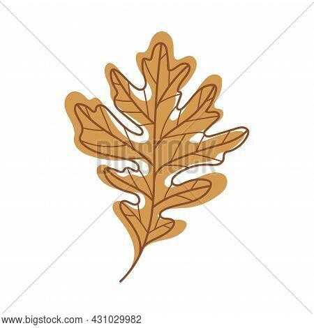 Brown Autumn Oak Leaf With Veins As Seasonal Foliage On Stem Vector Illustration
