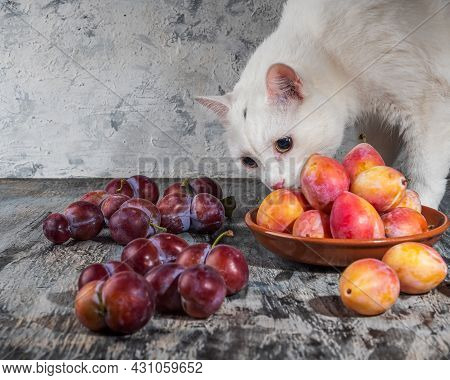 White Cat Sniffing Plums Of Red And Honey Varieties That Lie On A Gray Table