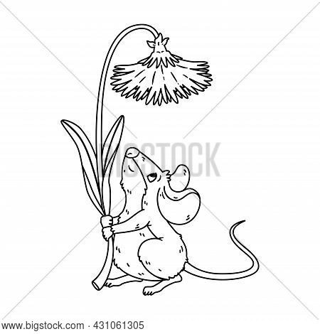 Little Forest Mouse Holding Dandelion. Meadow Vole With Flower. Rat Keep Blossom. Vector Character I