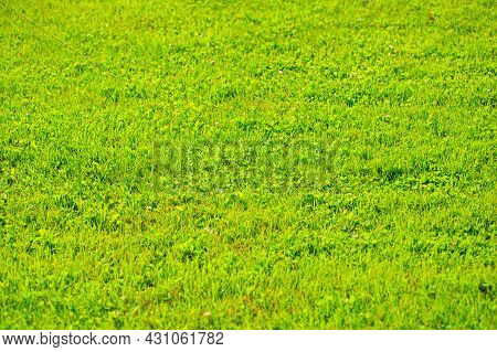 Nature Green Grass Texture Background, Grass Top View Ideal Concept Used To Create A Green Floor, La