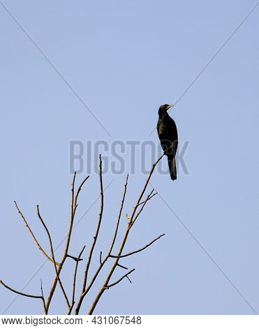 Black Water Bird Perching On Top Of A Dried Tree Branch During Daytime In A Clear Sky Background