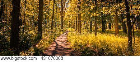 Forest Trail Sunset Scene. Woodland Path. Indian Summer Autumn City Park Scene. Fall Autumn Path Bac