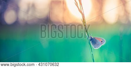 Beautiful Nature Banner Close-up, Summer Flowers And Butterfly Under Sunlight. Bright Blur Nature Su