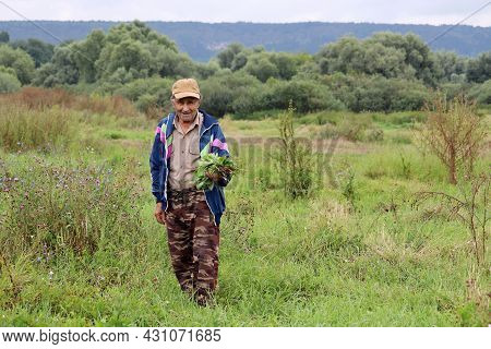 Old Man In The Field Collecting Grass To Feed Livestock. Green Meadow And Forest In Distance, Rural