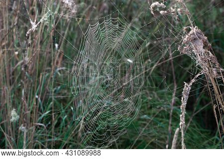 Spider Web With Dewdrops In The Early Morning On The Grass