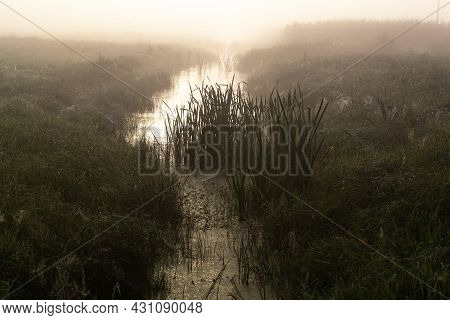 Fantastic Foggy River With Fresh Green Grass In The Sunlight. Sun Beams Through Tree. Dramatic Color