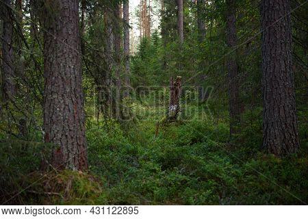 Forest Landscapes Before Dusk.