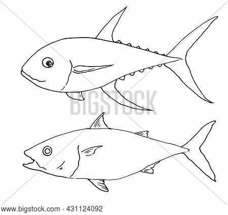 Vector Set Of Sea Tuna Fish. A Sketch-style Set Of Whole Sea Tuna Fish Side View, Black Isolated Out